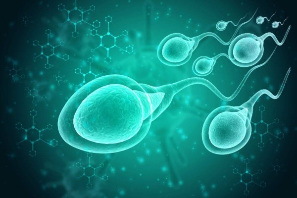 How to increase sperm count by food ?