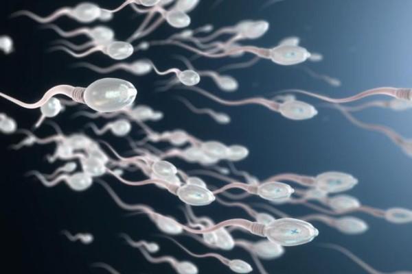 مواصفات السائل المنوي لحدوث الحمل